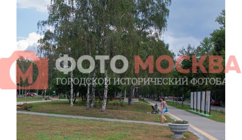 Березки в Есенинском бульваре