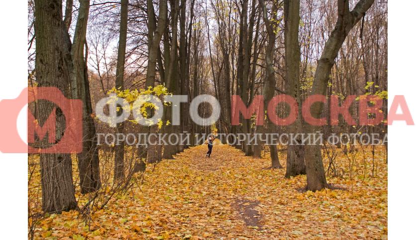 В Кусковском лесопарке