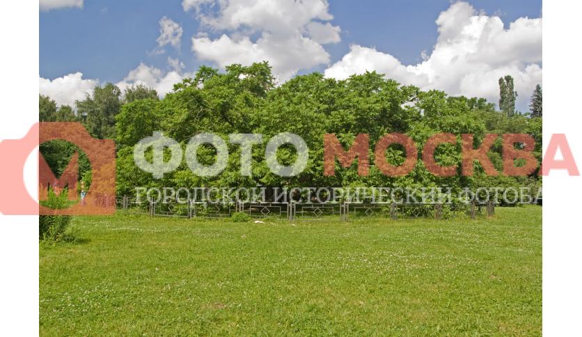 Орех Маньчжурский в Ботаническом Саду